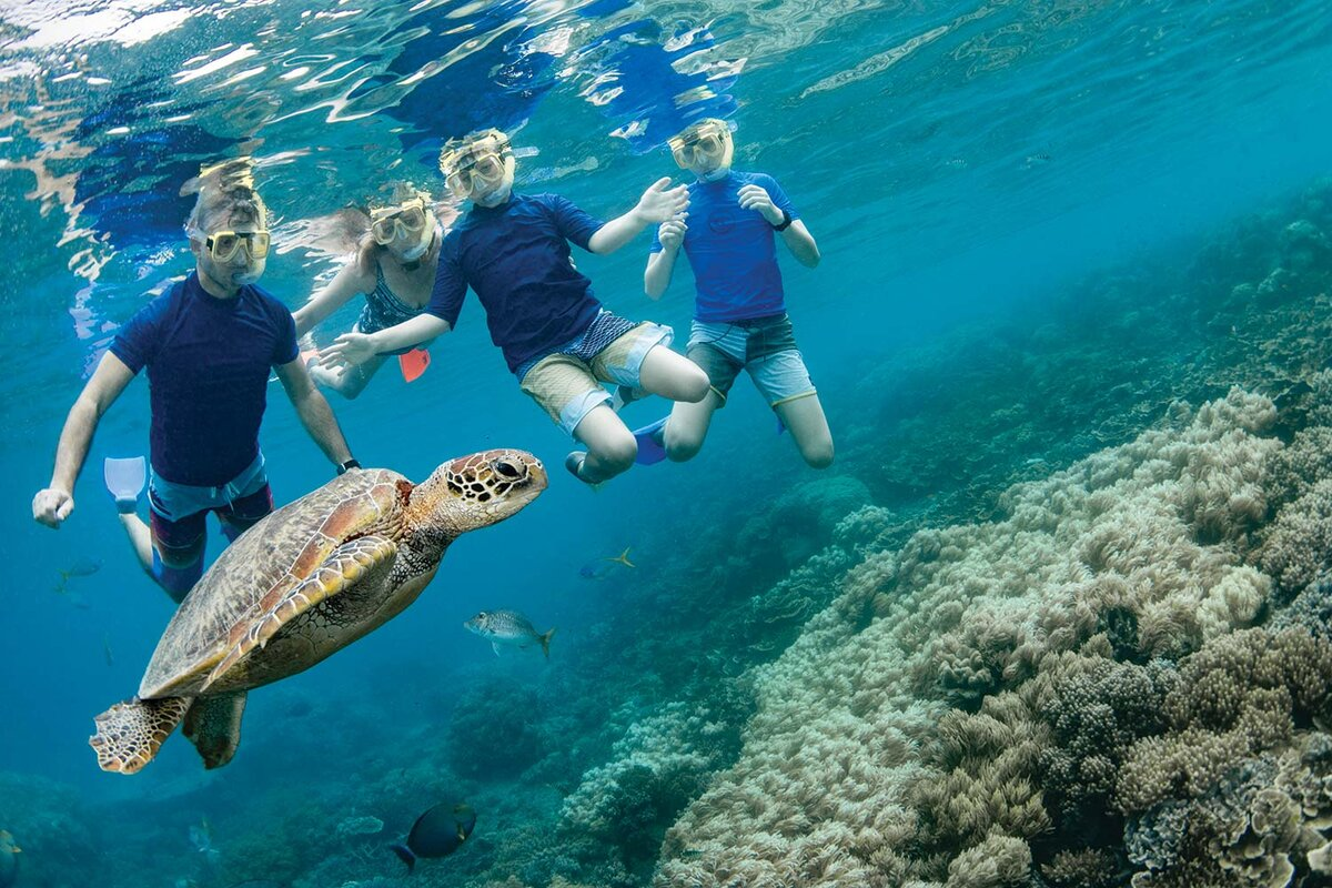 snorkellers with green sea turtle great barrier reef cairns